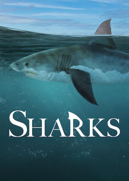 Sharks on Netflix UK